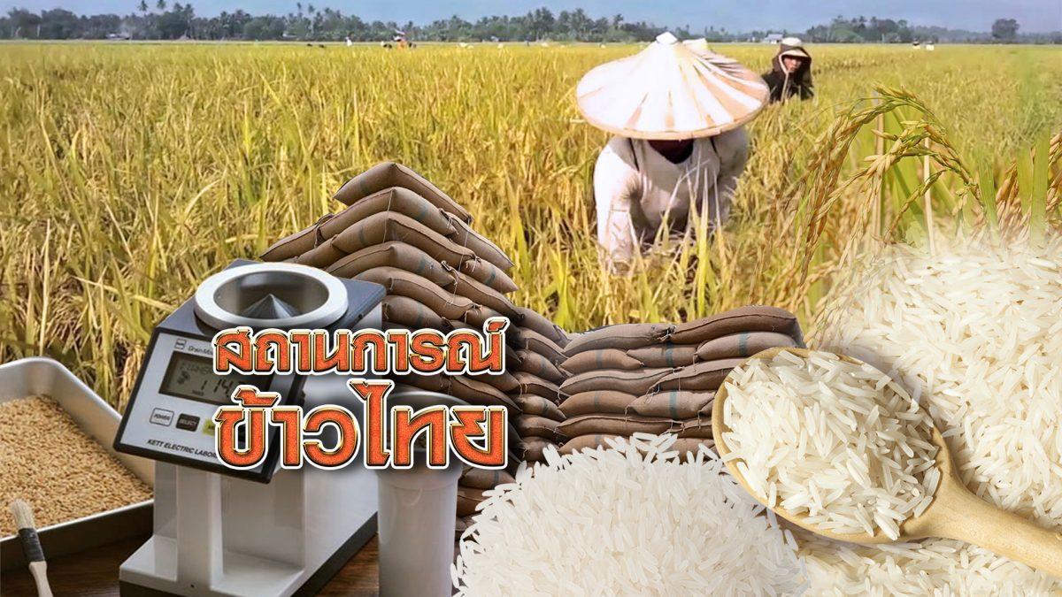 สถานการณ์ข้าวไทย 26-11-61