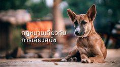 ข้อกฎหมายเกี่ยวกับการเลี้ยงสุนัข มีอะไรบ้าง อยากเลี้ยงต้องรู้ !
