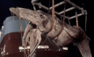 ผลพิสูจน์วาฬบรูด้าตายเพราะถูกเรือชน