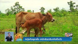 หญิงหม้ายชาวกัมพูชา เชื่อสามีกลับชาติมาเกิดเป็นวัว
