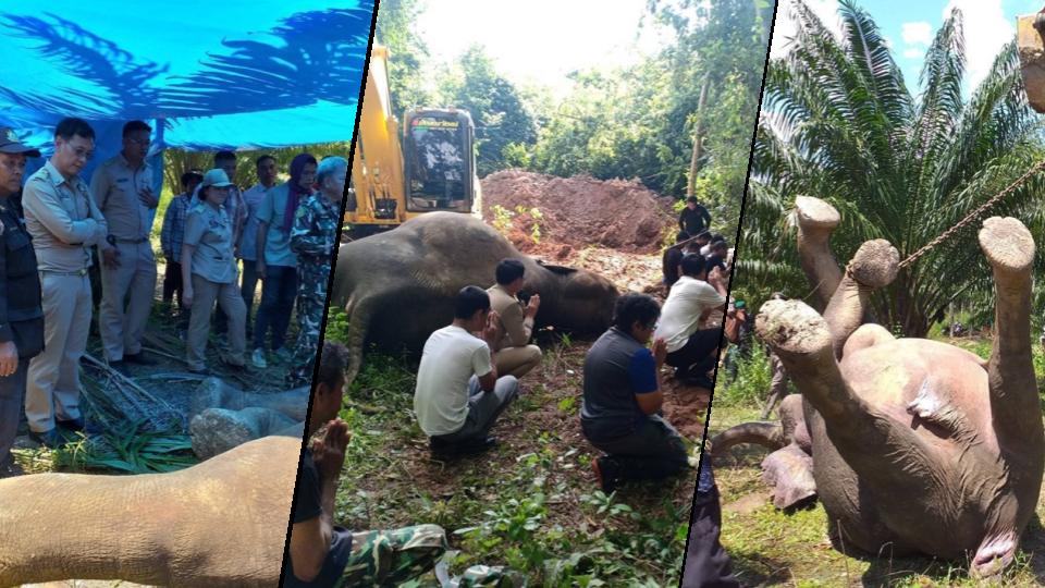 ผ่าชันสูตร ช้างป่าถูกชาวบ้านยิงตาย พบเพิ่งคลอดลูก