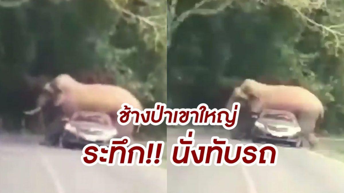 สุดระทึก! นาที ช้างป่าเขาใหญ่  นั่งทับรถเก่งนักท่องเที่ยว จนหลังคาหลังยุบ