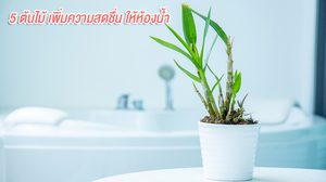 ตัวช่วยง่ายๆ  5 ต้นไม้ปลูกในห้องน้ำ ปลุกความสดชื่นในยามเช้า