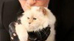 Choupette แมว เซเลบริตี้ แห่งวงการแฟชั่นโลก