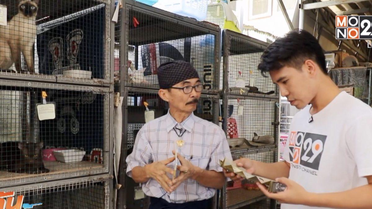 เจษฎาพาลุย : บ้านแมวไทยบางรัก (ตอนที่ 1)