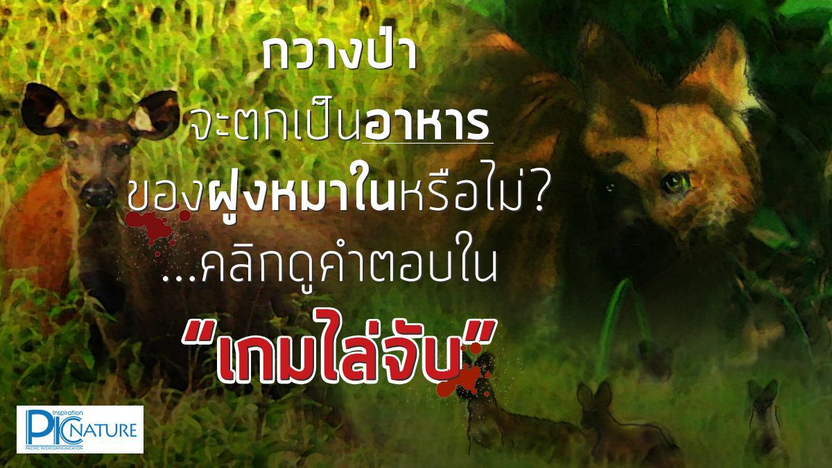"""กวางป่าจะตกเป็นอาหารของฝูงหมาในหรือไม่?...คลิกดูคำตอบใน """"เกมไล่จับ"""""""