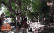 กระบี่-เตือนนักท่องเที่ยวระวังเชื้อไวรัสจากลิงและยุง