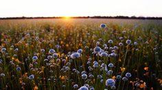 ทุ่งหนองหญ้าม้า อ.วารินชำราบ แลนด์มาร์คใหม่ของคนชอบถ่ายภาพ