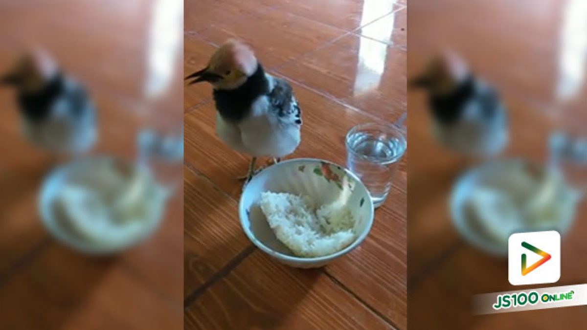"""""""มากินข้าวกินน้ำเด้อ"""" ว่าแต่เมื่อไรเจ้าจะได้กินล่ะเนี่ย.."""