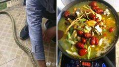 คนมันหิว!! เจ้า งู ดวงซวย เลื้อยเข้าไปที่หอพักนักศึกษาจนโดนจับต้มกินกันสบายใจ