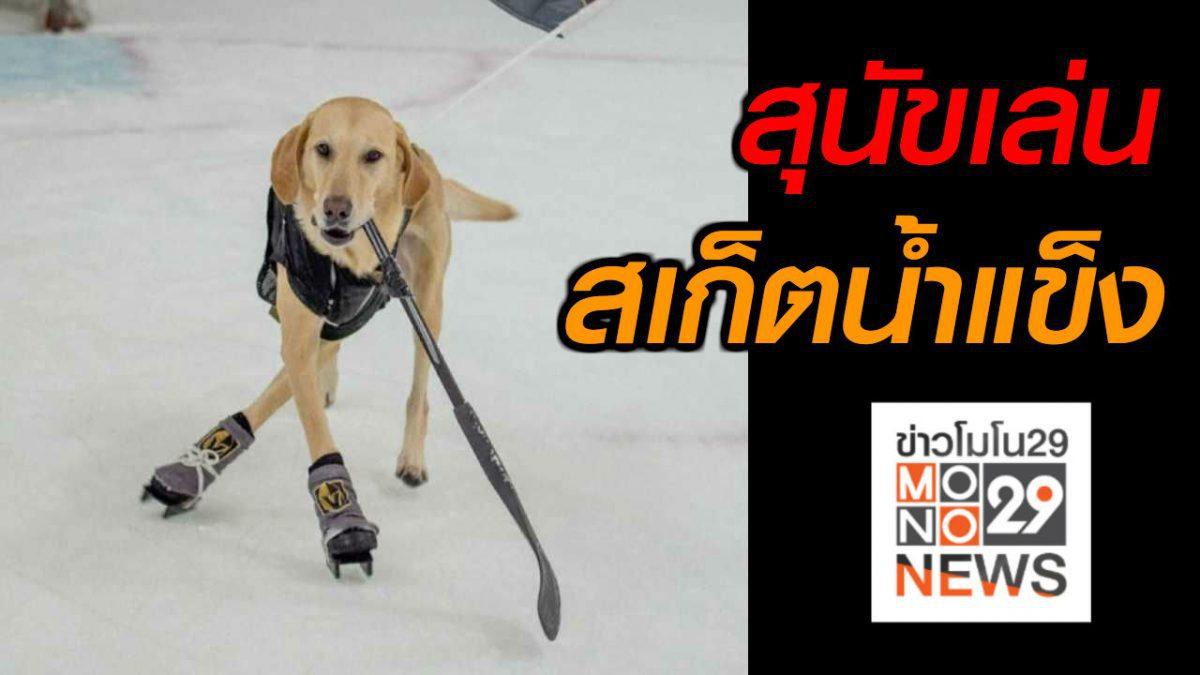 #เรื่องเล่ารอบโลก สุนัขเล่นสเก็ตน้ำแข็ง