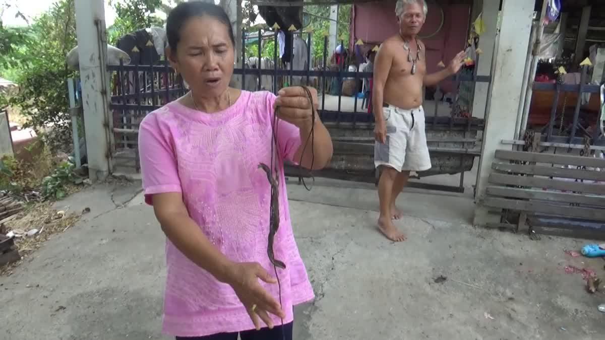ชาวบ้านผวา!! พบปลิงประหลาด โดนกัดจนต้องหามส่งโรงพยาบาล