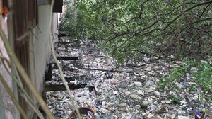 เปิดภาพสุดเศร้า! สภาพป่าชายเลนผืนสุดท้ายเมืองพัทยา