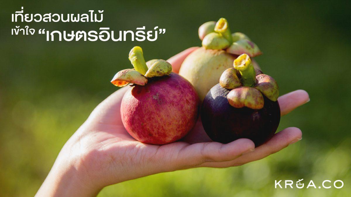 เที่ยวสวนผลไม้ เข้าใจเกษตรอินทรีย์