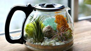 สวนขวด ทำง่าย! มือใหม่ก็ทำได้ ด้วยอุปกรณ์กาน้ำชา