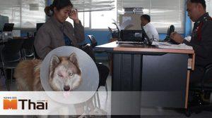 คนใจร้าย ตีสุนัขจนตาแตก ต้องควักลูกตาทิ้ง ซ้ำร้ายไม่รับผิดชอบค่ารักษา
