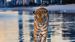 หนีป่าราบ ! เสือโต้คลื่น บุกชายหาดที่ออสเตรเลีย