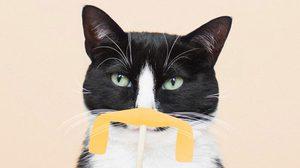 เพจแมว Princess Cheeto