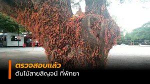 ตำรวจลงตรวจสอบ  ต้นไม้สายสิญจน์วัดเขาโพธิ์ทอง