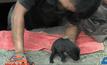ช่วยลูกสุนัขตกท่อระบายน้ำนาน 2 วัน