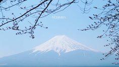 [รีวิว] เที่ยวโตเกียว เที่ยวง่าย เที่ยวสบาย …. ฉบับมือใหม่หัดเที่ยว