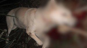 หนุ่มโหดรำคาญหมาเห่า คว้ามีดฟันคอดับ ก่อนตบบ้องหูเจ้าของเจ็บ