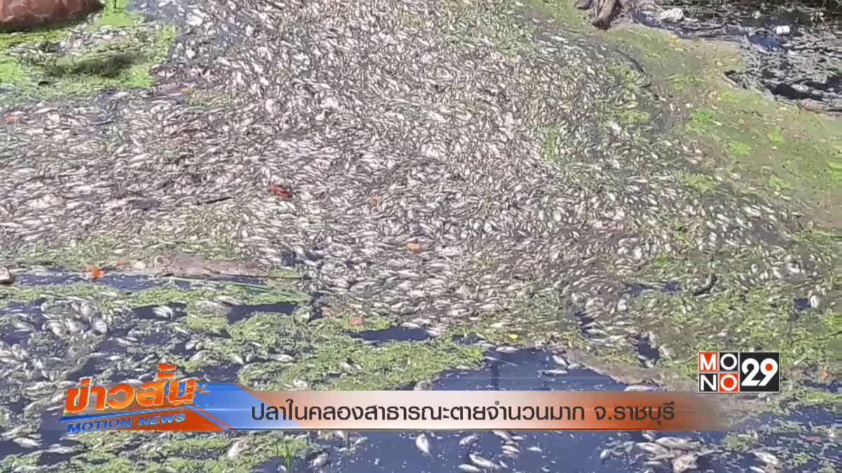 ปลาในคลองสาธารณะตายจำนวนมาก จ.ราชบุรี