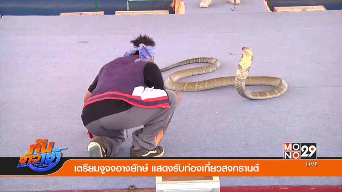 เตรียมงูจงอางยักษ์ แสดงรับท่องเที่ยวสงกรานต์