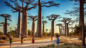 เกาะมาดากัสการ์ Madagascar - เกาะใหญ่ที่สุดอันดับ 4 ของโลก