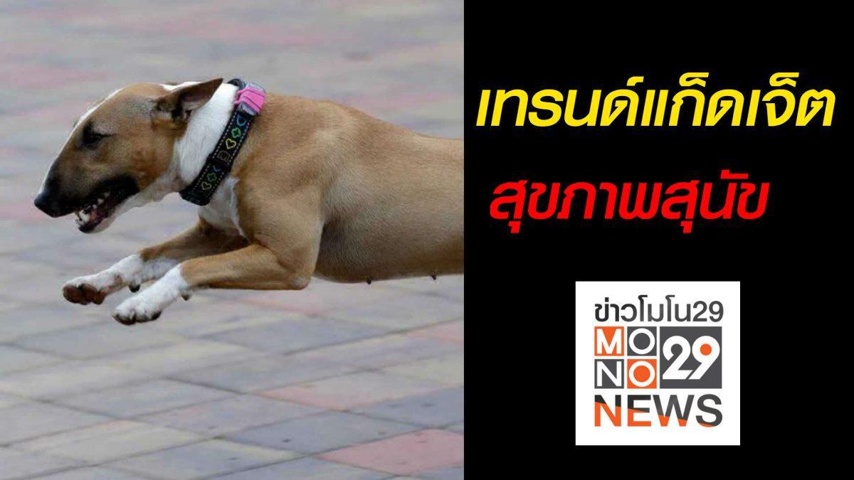 #เรื่องเล่ารอบโลก เทรนด์แก็ดเจ็ตสุขภาพสุนัข