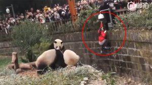 นาทีช่วยชีวิต ด.ญ. ตกบ่อแพนด้า ที่จีน