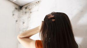 วิธีแก้ห้องชื้น เชื้อรา ขึ้นห้องบุกผนังและซอกหลืบในบ้าน