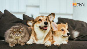 ฉีดวัคซีนพิษสุนัขบ้าฟรี 50 เขตทั่วกทม. ตั้งแต่วันที่ 2–13 ก.ย. 62
