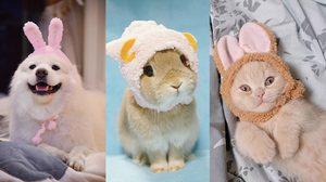 ภาพน่ารักของ กระต่าย น้องหมา และแมวน้อย คิวท์มากขอบอก