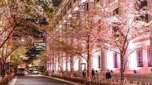 Nihonbashi Sakura Festival ชมซากุระบาน และงานศิลปะ ในกรุงโตเกียว