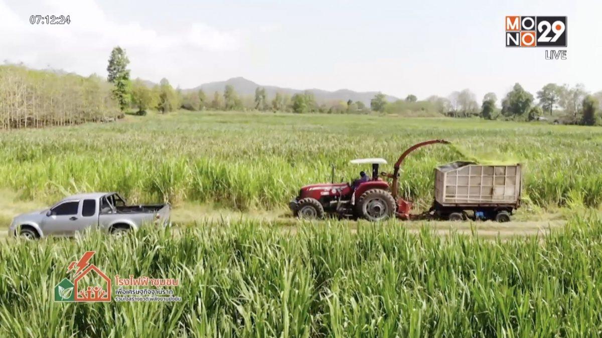 หญ้าเนเปีย พืชเศรษฐกิจ