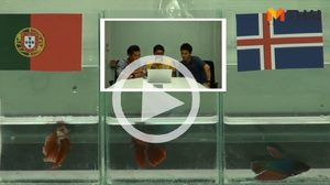 ซี้ซั้วฟันธง! ปลากัดทายผล ยูโร 2016 โปรตุเกส ปะทะ ไอซ์แลนด์ (14 มิ.ย.)
