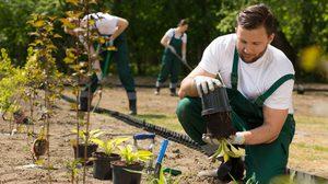 5 ต้นไม้ดูแลง่าย สร้างภูมิทัศน์ภาพรวมให้สวนสวย
