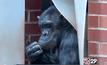 กรงจำลองชีวิตธรรมชาติของชิมแปนซี