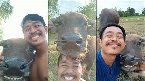 ทะเล้นสุดๆ ภาพหนุ่มเซลฟี่คู่ 'ควายยิ้ม' สัตว์เลี้ยงตัวโปรดกลางทุ่งนา