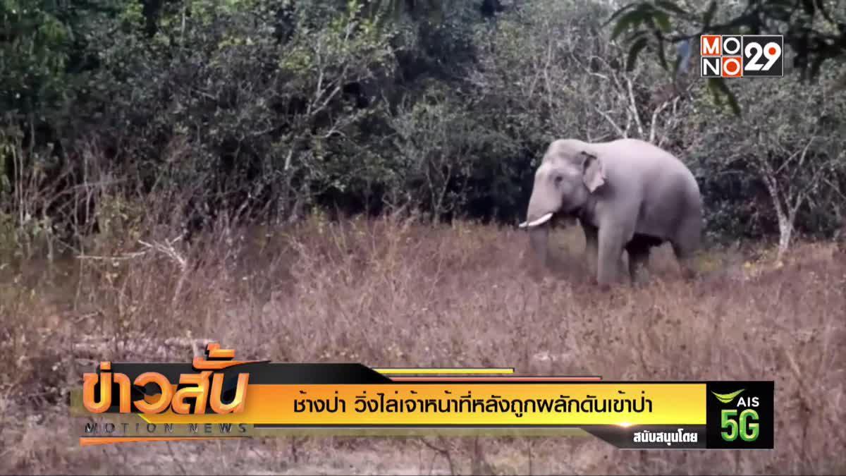 ช้างป่า วิ่งไล่เจ้าหน้าที่หลังถูกผลักดันเข้าป่า