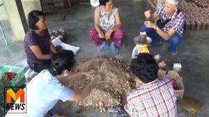เจ๋ง! สาวดึงผู้สูงอายุ เพาะเห็ดขาย สร้างงาน สร้างรายได้ในชุมชน ปีละ 2 แสน