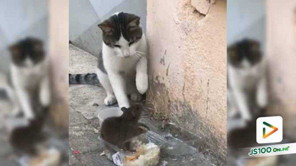 เจ้าแมวกล้าดียังไงมาขัดจังหวะการกินของเรา นี่แหนะ!