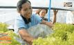 ชาวสวนยางรวมกลุ่มปลูกผักสลัดไร้ดินส่งขายห้างฯ