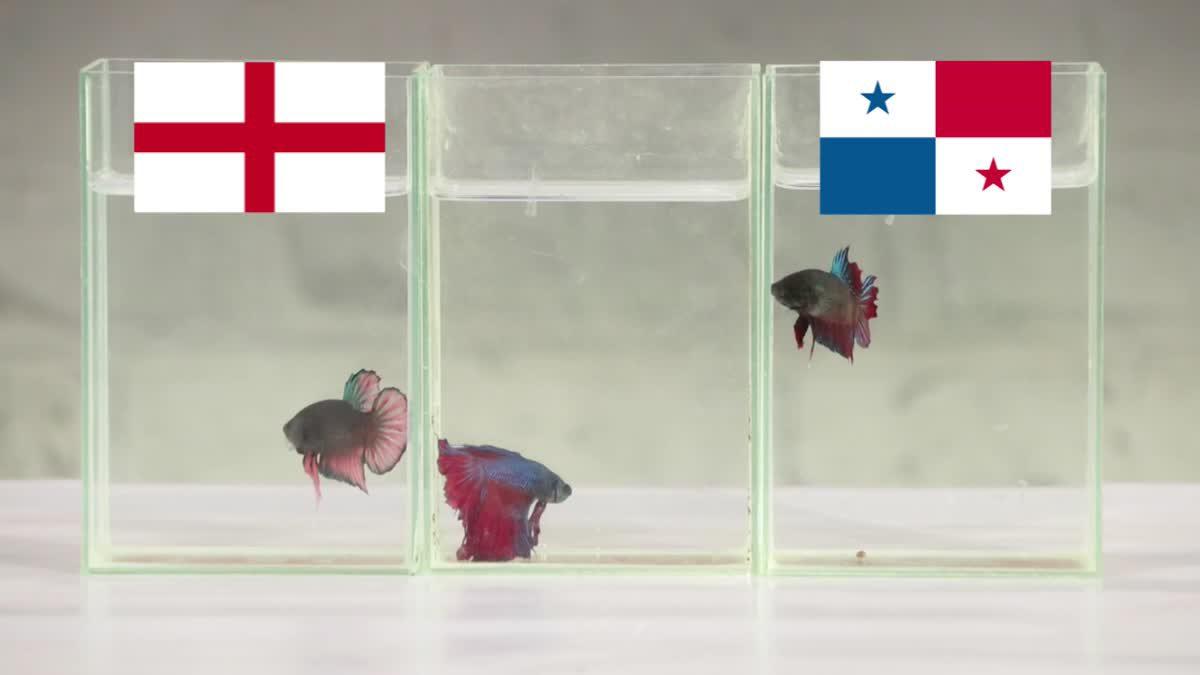 ซี้ซั้วเอามาเล่า ฟันธง ฟุตบอลโลก 2018 EP9