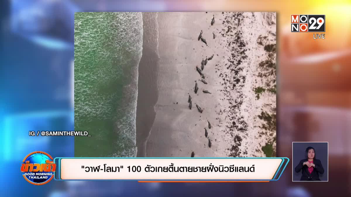 """""""วาฬ-โลมา"""" 100 ตัวเกยตื้นตายชายฝั่งนิวซีแลนด์"""