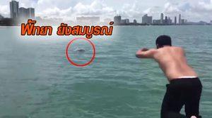 ทะเลพัทยายังสมบรูณ์ โลมาสีชมพูโผล่เล่นน้ำ