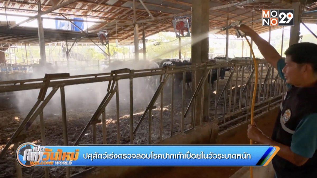 ปศุสัตว์เร่งตรวจสอบโรคปากเท้าเปื่อยในวัวระบาดหนัก