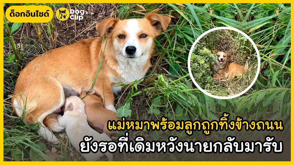 แม่หมาและลูกน้อยถูกทิ้งข้างถนน แต่ยังคงเฝ้ารอที่เดิมหวังนายรักจะกลับมารับ
