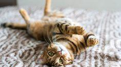 4 วิธีกำจัดกลิ่นฉี่แมว ออกจากบริเวณต่างๆ ภายในบ้าน